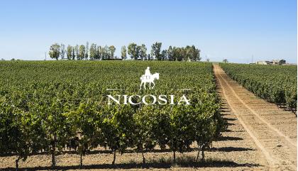 Cantine Nicosia: sinfonia di aromi e sapori siciliani
